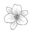 black and white lily isolated on white background vector image