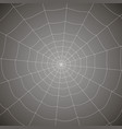 concentric white web on a gray background vector image