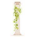 ivy column greek marble architecture