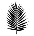 Palm leaf silhouette Tropical leaves vector image