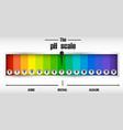 the ph scale diagram vector image vector image
