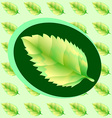Green leaf of the tree vector image vector image