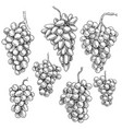 hand drawn grape bunch variety set vector image vector image