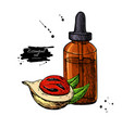nutmeg essential oil bottle and mace fruit hand vector image vector image