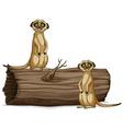Meerkats vector image