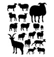 sheep silhouettes vector image