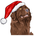 German shepherd in Santa Claus hat vector image vector image