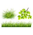 summer grass and leaves vector image vector image