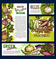 vegetables and farm veggies posters and banners vector image vector image