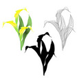 calla lily yellow flowers and leaves vector image vector image