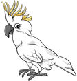 cockatoo parrot cartoon vector image vector image