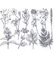 hand drawn flowers and herbs set vector image vector image