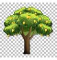 mango tree on transparent background vector image