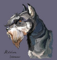 miniature schnauzer colorful hand drawing vector image vector image