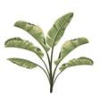 set tropical botanical foliage plants green vector image vector image