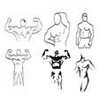 sketch of man torso vector image