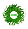 vetiver grass khus or chrysopogon zizanioides vector image