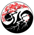 bonsai yin yang vector image vector image