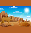 cartoon camels living in the desert vector image