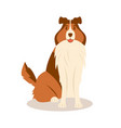 fluffy border collie sits tongue out vector image
