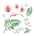 orchid tropical flowers floral elements in hand vector image