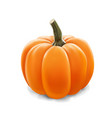 realistic pumpkin isolated on white vector image vector image