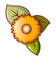 honey flower icon cartoon style vector image