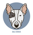 portrait of bull terrier vector image