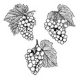 set of hand drawn grape design element for vector image vector image