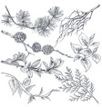 set of hand drawn ink sketch spring branches vector image