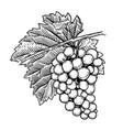 hand drawn grape design elements for poster menu vector image