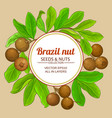 brazil nut branches frame on color background vector image