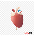 heart human internal organ realistic isolated vector image vector image