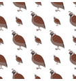 cartoon quail seamless pattern on white vector image vector image