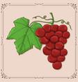 grapes hand drawn sketch vector image