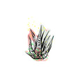 hand drawn abstract graphic drawing aloe vector image