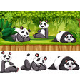 panda in the wild vector image vector image