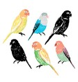 Set of the colorful hand drawn parrots vector image vector image