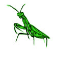 simple design praying mantis vector image vector image
