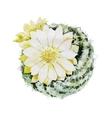 Watercolor flowering cactus vector image