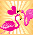 lovers flamingos on a sunny background vector image vector image