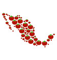 mexico map collage of tomato vector image