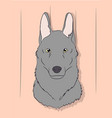 portrait of a gray wolf on a background vector image vector image