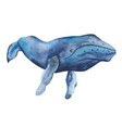 watercolor blue whale clipart vector image
