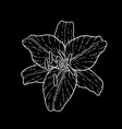 beautiful monochrome black and white lily vector image vector image