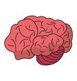brain idea human organ vector image vector image