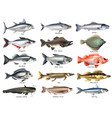 fishes icons set vector image
