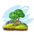 isolated tree in nature vector image vector image