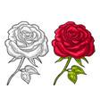 rose flower with leaf color engraving vintage vector image vector image