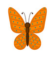 isolated cute butterfly icon vector image vector image